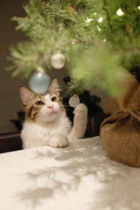 Die Weihnachtskatze des DMWV